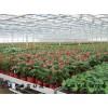 养殖用碳纤维发热线缆 远红外电地暖 热带花卉电地暖安装