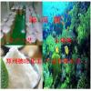 食品级海藻糖厂家、海藻糖的应用