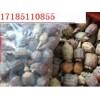 罂粟壳,米罂皮,米壳, 粟壳, 大量供应批发