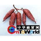 供应日本最知名鲜食型品种-红东