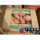 大量供应优质地瓜大量供应山东优质价廉高淀粉地瓜