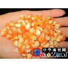 【省内30吨省外60吨起送货全款价优10元/吨】供应云南2等饲料玉米
