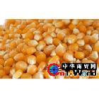 供应(产地价批发)玉米